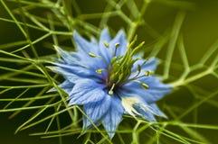 Macro van een bloem Stock Afbeelding