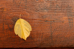Macro van een droog geel blad in de herfst Royalty-vrije Stock Fotografie