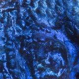 Macro van een Elektrische Blauwe Hap-huid stock fotografie