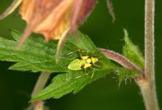 Macro van een insect royalty-vrije stock foto's