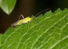 Macro van een insect stock fotografie