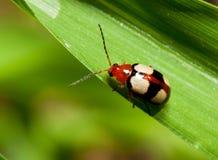 Macro van een kleurrijk insect stock foto