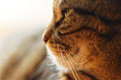 Macro van een mannelijke kat stock foto's