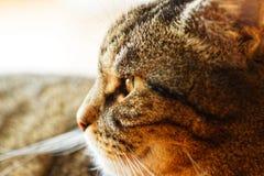 Macro van een mannelijke kat royalty-vrije stock fotografie