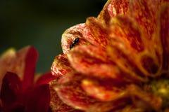 Macro van een mier op een bloem royalty-vrije stock foto's
