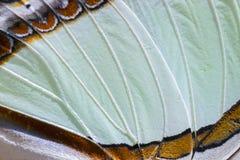 Macro van een Nawab-Vlindervleugel die wordt geschoten Stock Foto