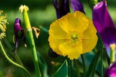 Macro van een oranje bloem op een donkergroene achtergrond royalty-vrije stock afbeelding
