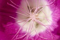 Macro van een roze bloem wordt geschoten die Stock Fotografie