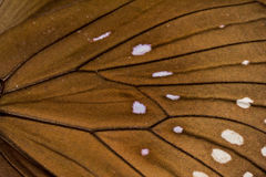 Macro van een vleugel die van de Kraaivlinder wordt geschoten Stock Foto's