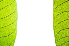 Macro van groen verlofkader Stock Afbeeldingen