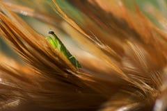Macro van groene bidsprinkhanen wordt geschoten die Royalty-vrije Stock Foto's
