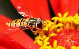 Macro van insect Royalty-vrije Stock Afbeeldingen