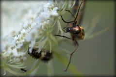Macro van insecten Royalty-vrije Stock Afbeeldingen