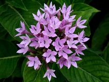 Macro van kleine purpere bloembloesem in Regenachtige Dag Stock Fotografie