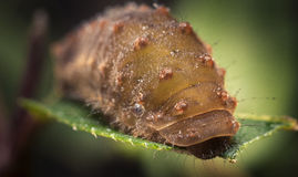 Macro van onbekende worm. Stock Fotografie
