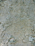 Macro van paddestoel op palm Stock Fotografie