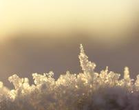 Macro van Sneeuw Stock Afbeelding