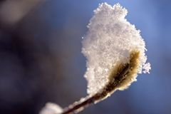 Sneeuw op een Stromende knop van de Amandel Stock Fotografie