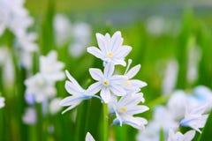 Macro van uiterst kleine witte bloemen wordt geschoten die royalty-vrije stock foto