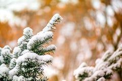 Macro van witte sneeuw bovenop donkergroene jeneverbessentak op bruine en gouden achtergrond tijdens zonsondergang wordt geschote Stock Foto