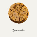 Macro vector illustration of a tree cut. Card or poster or cover template Stock Photos