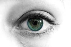 Macro verde B&W dos olhos azuis foto de stock royalty free