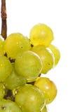 Macro verde bagnata dell'uva Fotografia Stock Libera da Diritti