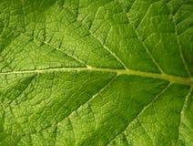 Macro verde de la hoja Imagen de archivo