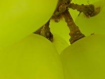Macro verde dell'uva Fotografia Stock Libera da Diritti