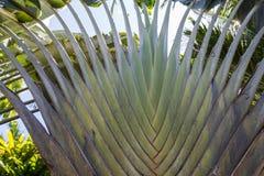 Macro verde tropical del fondo de la palmera imagen de archivo