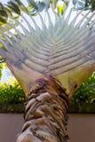 Macro verde tropical del fondo de la palmera imagen de archivo libre de regalías