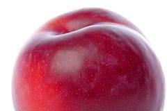 Macro vermelho da ameixa isolado Imagens de Stock Royalty Free