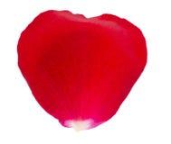 Macro vermelho da pétala de Rosa fotos de stock royalty free