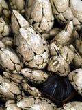 Macro vicina in su dei seashells Immagine Stock Libera da Diritti