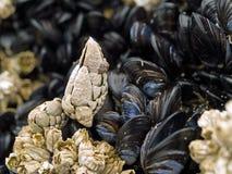 Macro vicina in su dei seashells Fotografie Stock Libere da Diritti