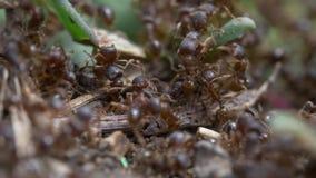 Macro vid?o de fourmis banque de vidéos