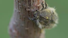 Macro video dell'insetto archivi video