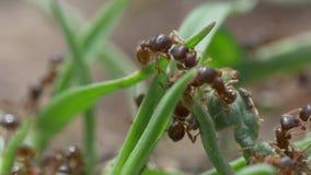 Macro video delle formiche video d archivio