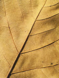 Macro view on autumn brown leaf Stock Images