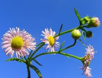 Beautiful pictures of small  flowers Royalty Free Stock Images