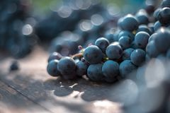 Macro view of blue grapes on wine barrel royalty free stock photography