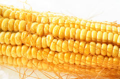 Macro view of corn cob Stock Image