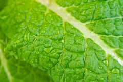 Macro view of dew on leaf Royalty Free Stock Photos