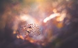 Macro view of dried wild flower royalty free stock photography