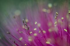 Abstract macro flower stamen Stock Photo