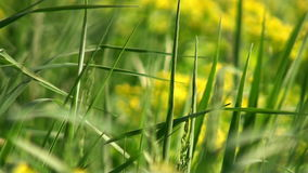 Macro view of fresh green grass stock video footage