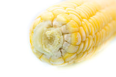 Macro view of frozen cob of corn. Closeup. Royalty Free Stock Images