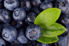 Macro view group fresh blueberries with leaf background Royalty Free Stock Images