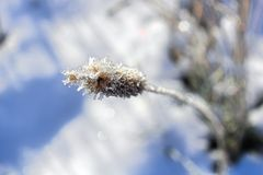 Macro view of hoar frost covering a grass head Stock Image