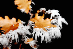 Macro view of ice on leaves. Macro view of ice crystals on brown leaves with brown background Royalty Free Stock Photo